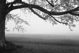 Tree in a farm, Knox Farm State Park, East Aurora, New York State, USA Photographic Print by  Panoramic Images