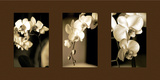 Exotic Blooms Photographic Print by Cinzia Ryan