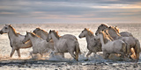 Running Horses Impressão fotográfica por Xavier Ortega