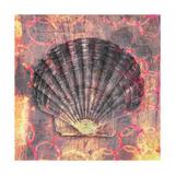 Seashell-Scallop Prints by Elena Ray
