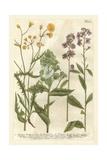 Weinmann's Garden VI Poster by Johann Wilhelm Weinmann