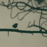 Caligraphy Bird II Photographic Print by Elena Ray