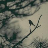 Caligraphy Bird I Photographic Print by Elena Ray