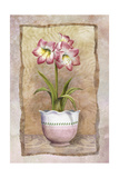 Spring Amaryllis Art by Abby White
