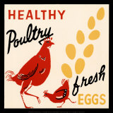 Healthy Poultry-Fresh Eggs Plakat