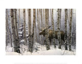 A Walk in the Woods Prints by Stephen Lyman