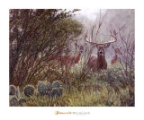 Lone Star Whitetail Posters by John Banovich