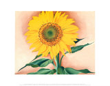 A Sunflower from Maggie, 1937 Print by Georgia O'Keeffe