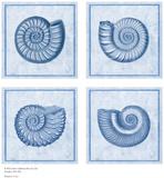 Blue Nautilus Poster by Sarah Elizabeth Chilton