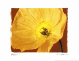 Poppy II Prints by Amy Melious