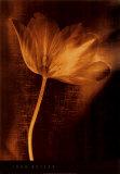 Bronze Tulip II Posters by John Butler