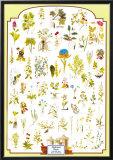 Medicinal Plants - International Edition Poster