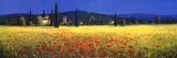 Tuscan Panorama, Poppies Prints by David Short