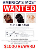 Wanted The Lab Gang Emaille bord