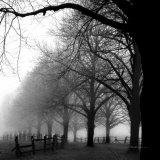 schwarz/weiß Morgen Kunstdrucke von Harold Silverman