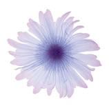 Fiore bianco ghiaccio Stampe