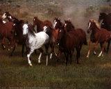 Wild Horses Kunstdruck von Ron Kimball