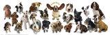 Los perros son lo mejor Láminas por Anthony Matos