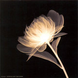 Full Bloom Posters