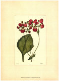 Red Curtis Botanical IV Art