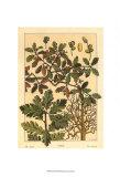 Oak Tree, Art Print