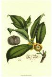 Exotic Foliage I Poster