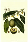 Exotic Foliage II Prints