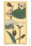 Water Lily I Posters by M. P. Verneuil