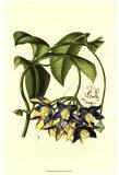 Exotic Foliage III Print