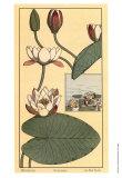 Seerose II Kunstdrucke von M.P. Verneuil