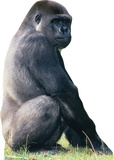 Gorilla Lifesize Standup Poster Stand Up