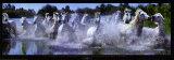 Caballos de La Camarga Láminas por Steve Bloom