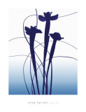 Blue Iris Láminas por Nina Farrell