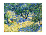 Olive Orchard, c.1889 Gicledruk van Vincent van Gogh