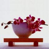 Magenta Orchids Prints