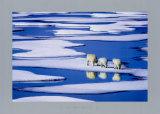 Polar Bear Family Posters by Hinrich Basemann