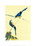 Birds Posters by Aurore De La Morinerie