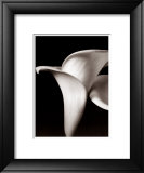 Lilies Prints by Bill Philip