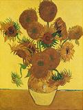 Fifteen Sunflowers Posters av Vincent van Gogh