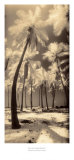 Palm Shadows I Print by Susan Friedman