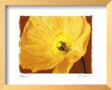 Poppy II Print by Amy Melious
