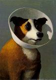 Filmhund Kunstdrucke von Michael Sowa