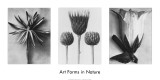 Art Forms in Nature II Prints by Karl Blossfeldt