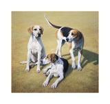 Cotswold Foxhounds Reproduction pour collectionneur par Gary Stinton