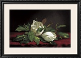 Magnolia Buds Prints by Martin Johnson Heade
