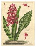 Fleur de Rouge I Print