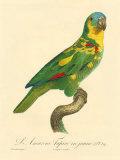 Barraband Parrot No. 89 Poster di Barraband, Jacques