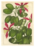 Fleur de Rouge VI Art
