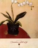 Cinnabar Still Life II Art by Maria Eva