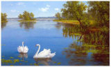 Swans on the Lake Prints by  Slava